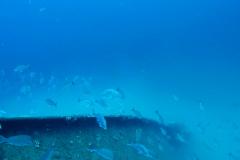 RGV-Reef-Photo-1