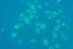 RGV-Reef-Photo-14