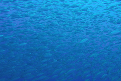 RGV-Reef-Photo-16