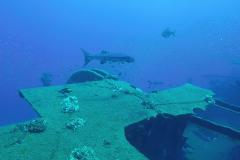 RGV-Reef-Photo-17