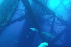 RGV-Reef-Photo-8