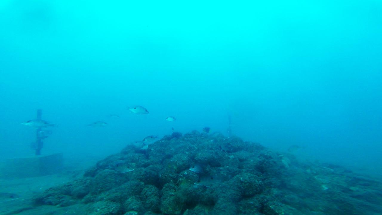 RGV Reef Underwater Photo