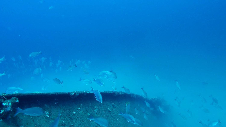 - rgv reef photo 26 scaled - RGV Reef
