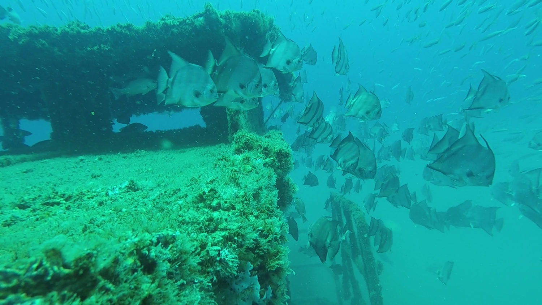 RGV Reef Photo