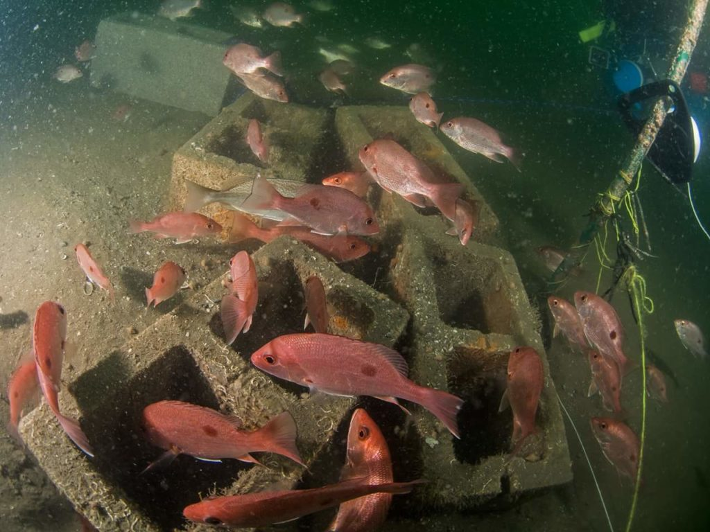 RGV Reef Photo of Snapper