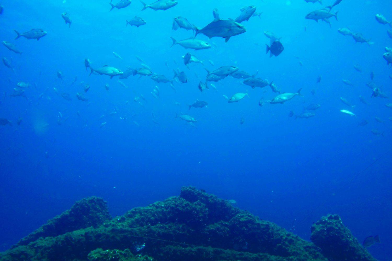 rgv reef spi