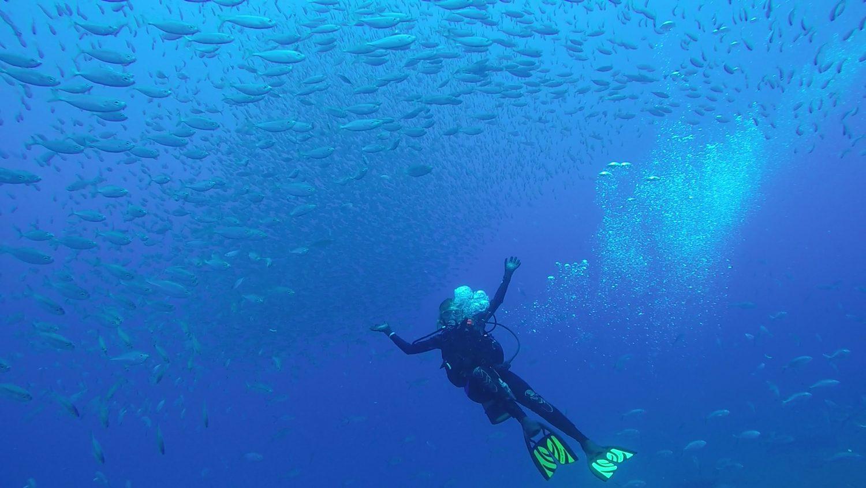 RGV Reef Diver