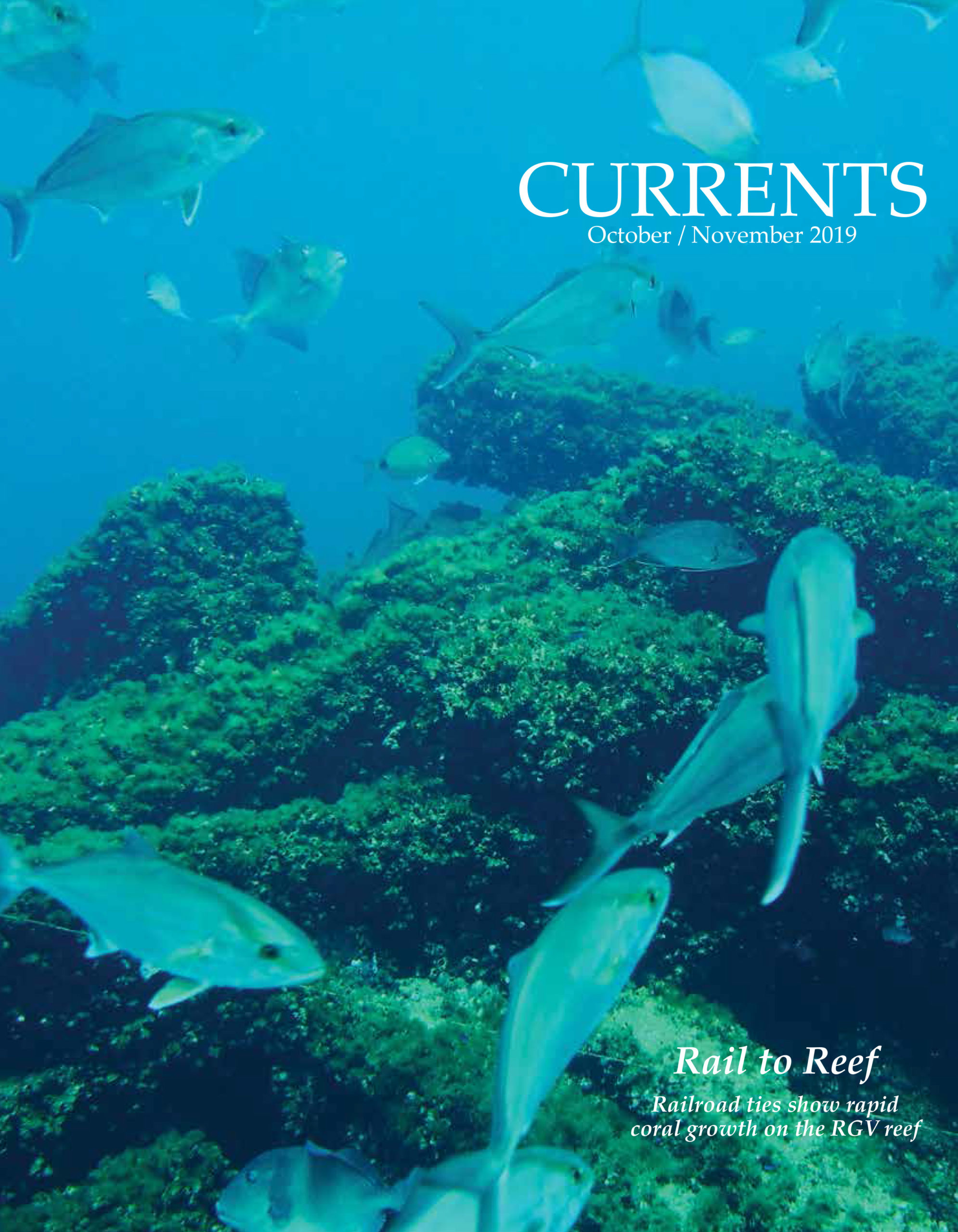 - CUR OCT NOV 2019 scaled - RGV Reef