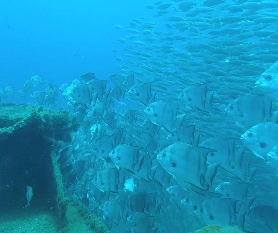 Photos of the RGV Reef