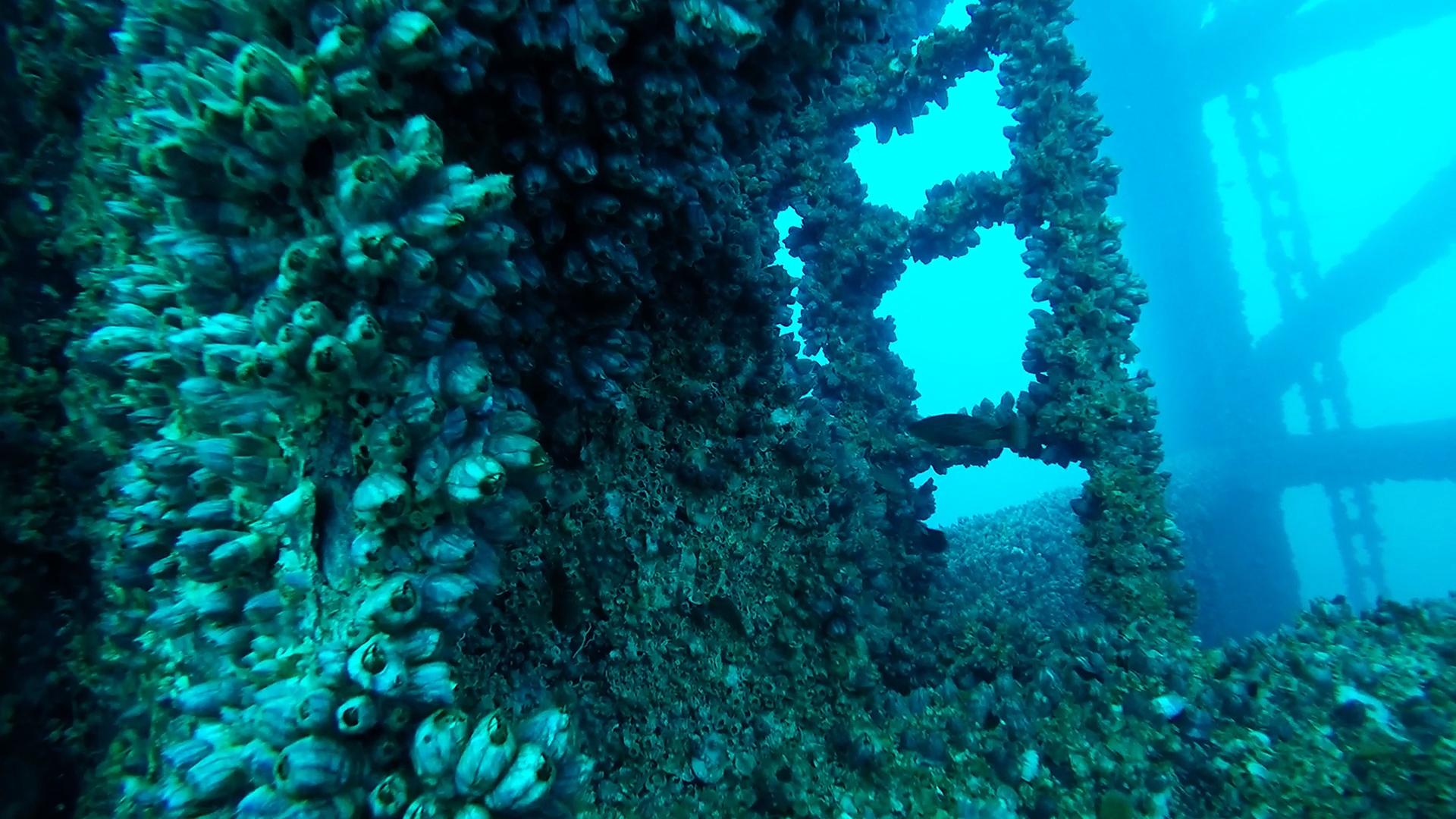- Sequence 01.Still019 - RGV Reef